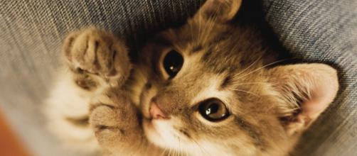 Fond d'ecran Petit chat mignon - Wallpaper - wallfizz.com