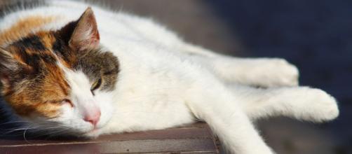 Comment protéger un chat de la chaleur - crédit photo The weather.com