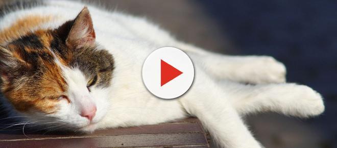 Canicule : eau fraiche, climatisation...Les gestes à adopter pour protéger un chat ou un chien