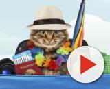 Voyage à l'étranger avec un chat : formalités et démarches ... - doctissimo.fr