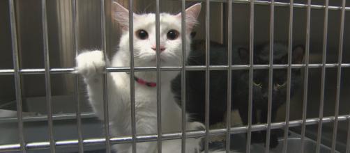 Le nombre de chats abandonnés ne cesse d'augmenter en France - Crédit photo Radio-Canada.ca
