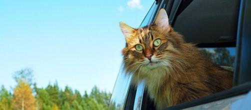 Caramel, ce chat qui a fait du BlaBlaCat - Crédit photo Positivr