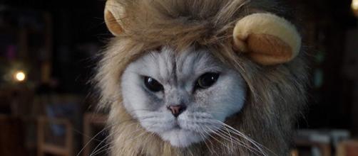 Ces chats qui detestent leur déguisement - photo publiée sur Amazon.fr