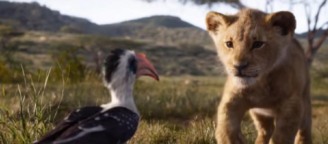 disney u0026 39 s remake of  u0026 39 the lion king u0026 39  already creating