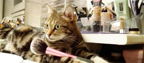 ces chats qui cassent tout et qui en ont rien à faire
