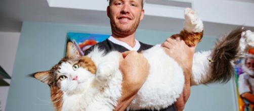Ces chats qui prennent trop de place - photo publiée sur holidogtimes.com