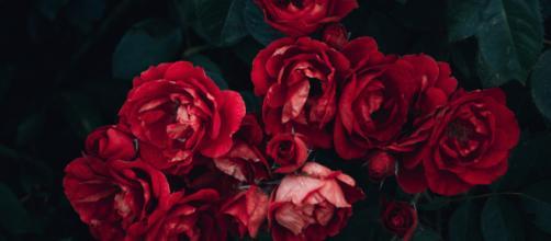 7 raisons de ne plus acheter de fleurs coupées – Consommons sainement - consommonssainement.com