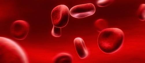 Globuli rossi o eritrociti - panoramasanita.it