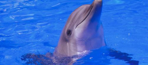 Un vídeo muestra a una madre delfín protegiendo el cuerpo de su cría