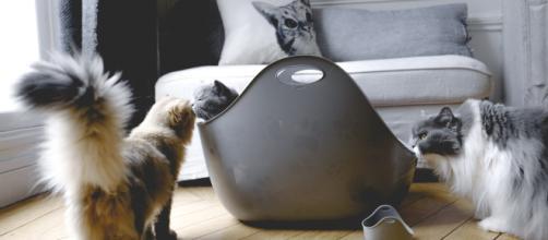 Bac à litière design et poubelle magique anti-odeurs - LITTERLOCKER - vanessapouzet.com