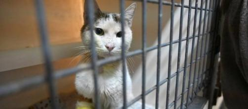Une loi pour lutter contre l'abandon de chats - Crédit photo Ouest France
