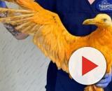 L'oiseau rescapé a été soigné - photo publiée sur huffingtonpost.fr