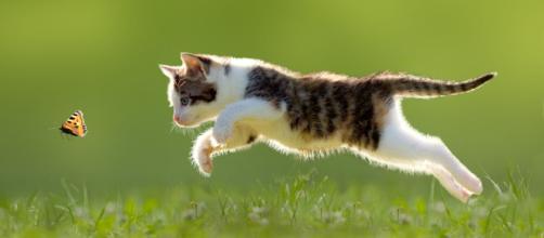 Ce que font les chats sans leur maitre - Photo publiée sur Perfect fit