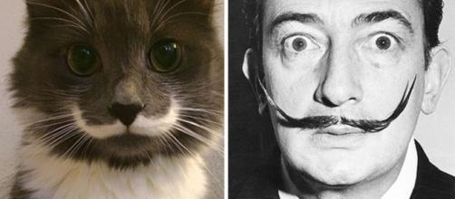 Ces chats qui ressemblent à des personnes célèbres