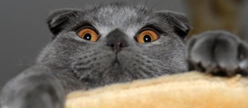 Les chats préfèrent les hommes à la nourriture - photo publiée par Ohmymag