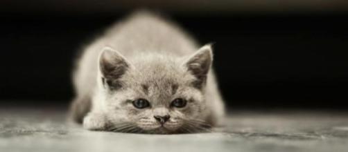 Comment savoir si mon chat est triste - photo publiée par Animaux