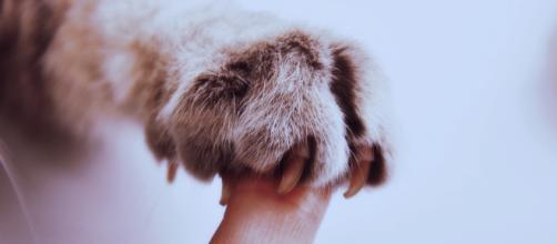 Images Gratuites : main, blanc, fourrure, chat, mammifère, oreille ... - pxhere.com