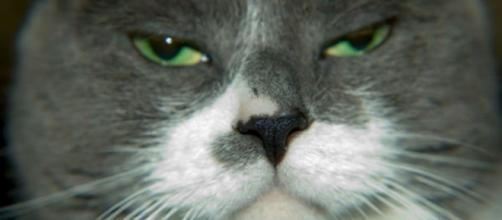 Voici comment les chats voient leur maitre - photo publiée sur Slate