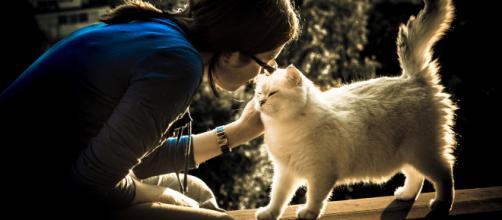 Fond d'écran : amour, chat, félin, bavarder, Katze, Britannique ... - wallhere.com