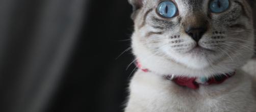 Images Gratuites : adorable, Photographie d'animaux, tête de chat ... - pxhere.com