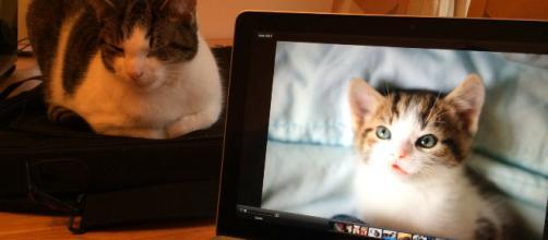 Images Gratuites : portable, ordinateur, Macbook, vieux, Jeune ... - pxhere.com