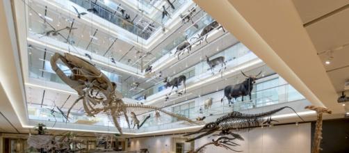 Muse: il museo delle scienze di Trento