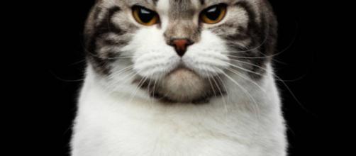 6 signes qui montrent qu'un chat n'est pas content - photo publiée par Anymalix