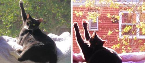 Ces chats qui profitent un peu trop du soleil - (photo publiée par bridoz.com)