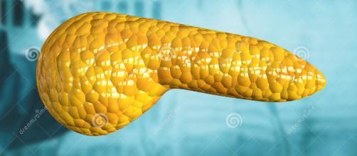 El páncreas es un órgano del cuerpo humano indispensable en la producción hormonal. - dreamstime.com