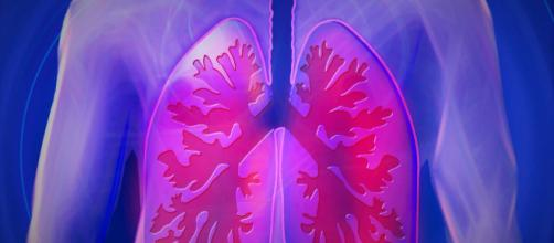 La pleura protege a los pulmones. - curiosoando.com