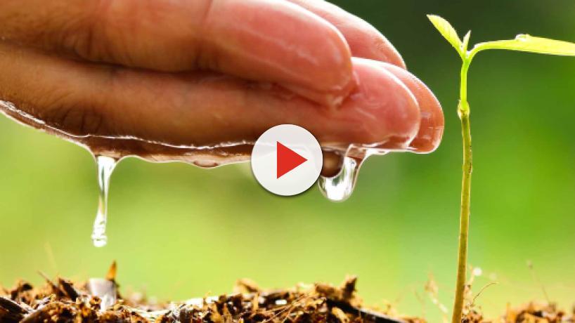 Controlar el agua o reciclar: Algunos consejos para cuidar el medio ambiente