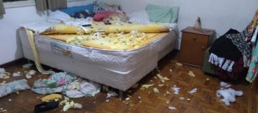 Destruição feita pelo cachorro foi registrada em vídeo. (Arquivo Pessoal)