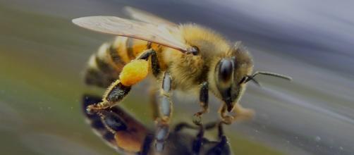 Calo della produzione di miele