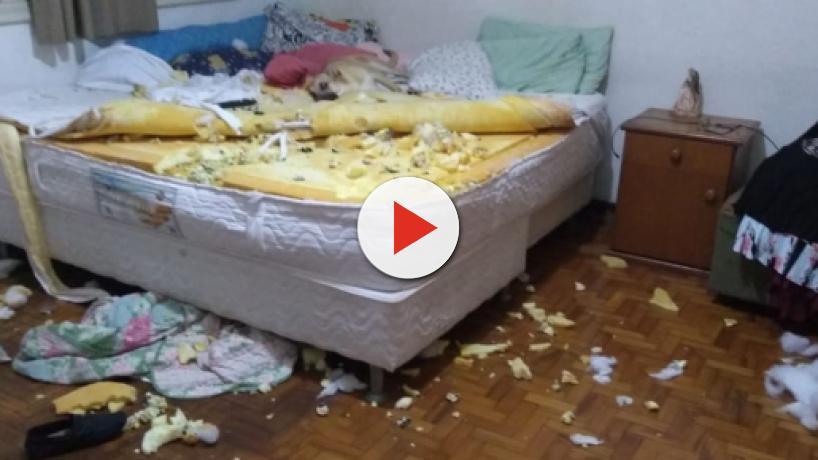 Mulher filma destruição feita por cachorro de estimação e vídeo faz sucesso na web