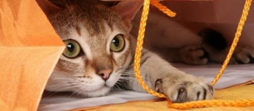 Apprendre des tours à son chat c'est possible - Photo publiée sur le site Wamiz