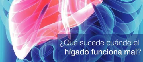 El hígado es el órgano encargado de fabricar la bilis. - clinicapueyrredon.com