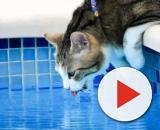 Les dangers qui guettent les chats pendant les vacances - Photo publiée par 30 millions d'amis