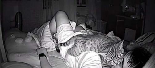 Un chat dort sur le visage de son maitre - photo publiée par Ohmymag