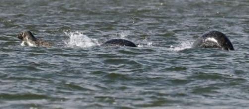 DDopo l'Area 51, 21 mila persone vogliono invadere Loch Ness | Fox News - foxnews.com