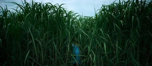 'Nell'erba alta' tratto da un racconto di King in uscita su Netflix il 4 ottobre
