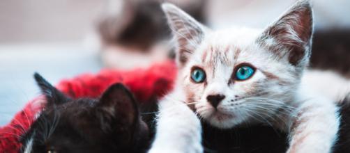 New York interdit le dégriffage des chats - rtl.fr