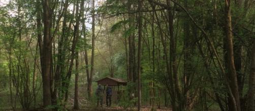 Tragedia in Calabria: trovato il cadavere di un uomo nei boschi