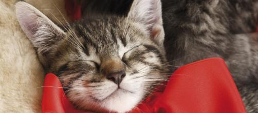 Comment apprendre à votre chat à reconnaître son prénom - esprit-chat.com