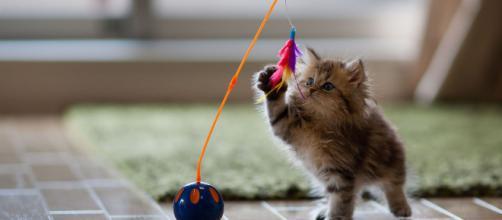 10 minutes pour jouer avec votre chat | Comment chat va bien - wordpress.com