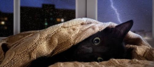 Comment calmer un chat pendant l'orage - Photo publiée sur ma vie de chat