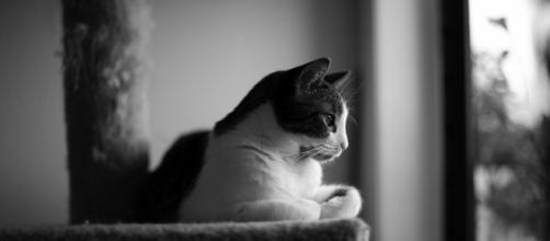 Fond d'écran : noir et blanc, Bw, amour, chat, Canon, noir blanc ... - wallhere.com