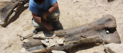 El fémur de dinosaurio más grande aparece en Francia