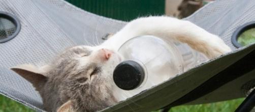 7 astuces pour rafraichir son chat - photo publiée par Wamiz