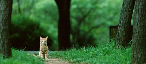 chat seul-Mondiale des animaux Fonds d'écran Aperçu | 10wallpaper.com - 10wallpaper.com