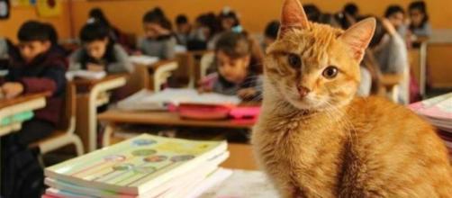 Tombi le chat qui allait en classe en Turquie - photo publiée sur redaction.media